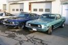 Mustangs in Iceland